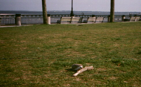 Murray plays with wood at Waterfront Park.jpg (36088 bytes)